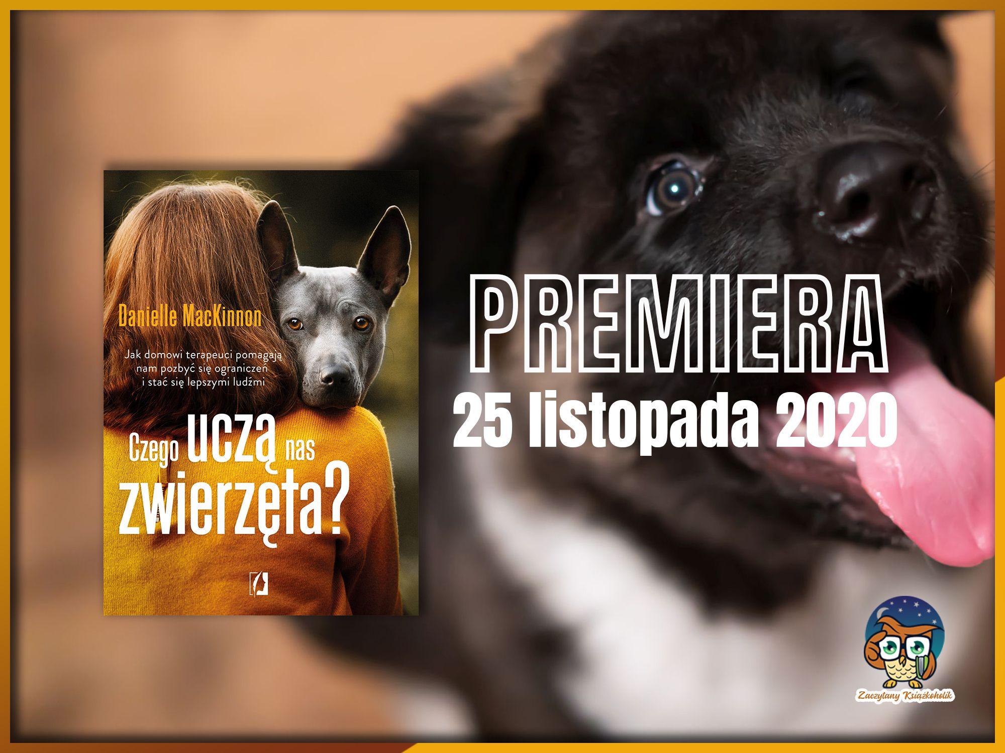 czego uczą nas zwierzęta, zaczytanyksiazkoholik.pl